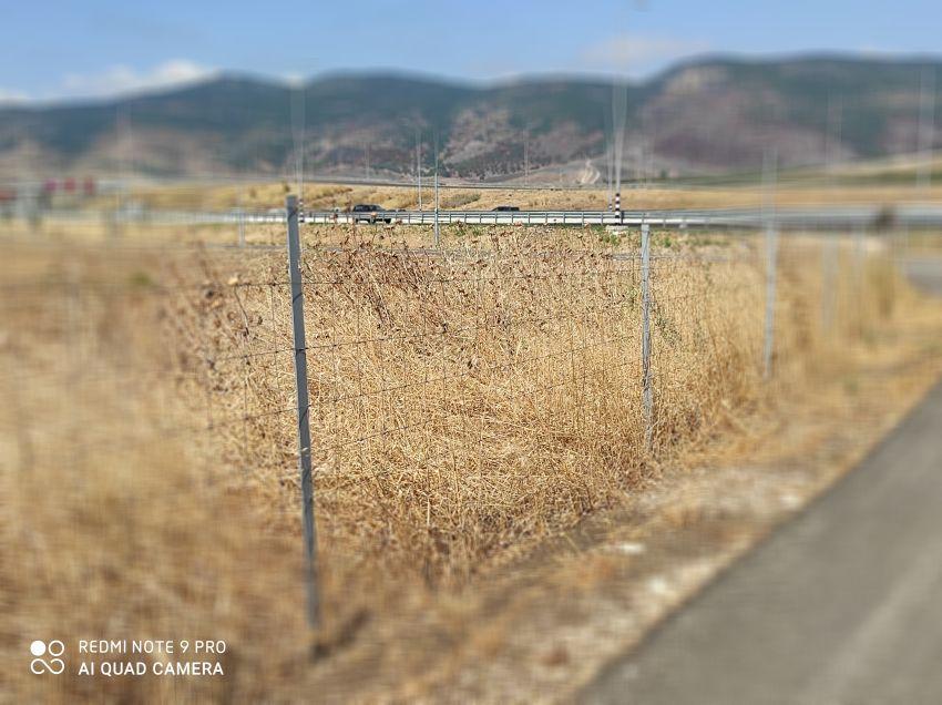 גדר אוסטרלית ליד צומת יגור